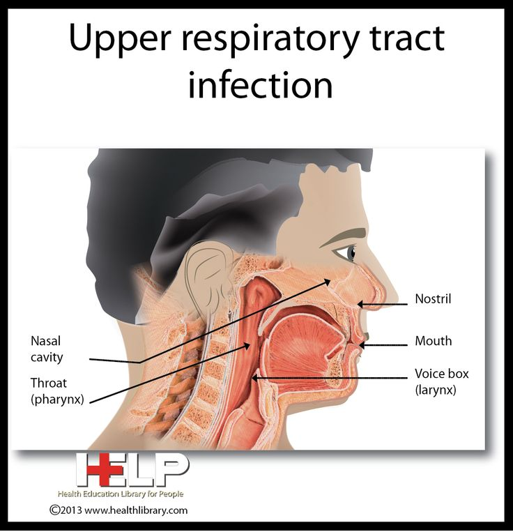 Upper Respiratory Tract Infection | Respiratory System ...
