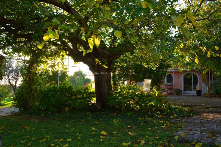 Autumn call
