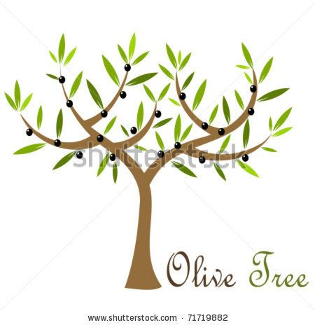 Olive tree with black olives. Vector illustration - stock vector