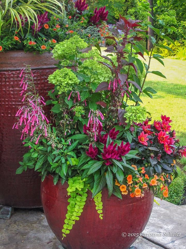 783 best images about potted plants on pinterest container plants container gardening and - Container gardening ...