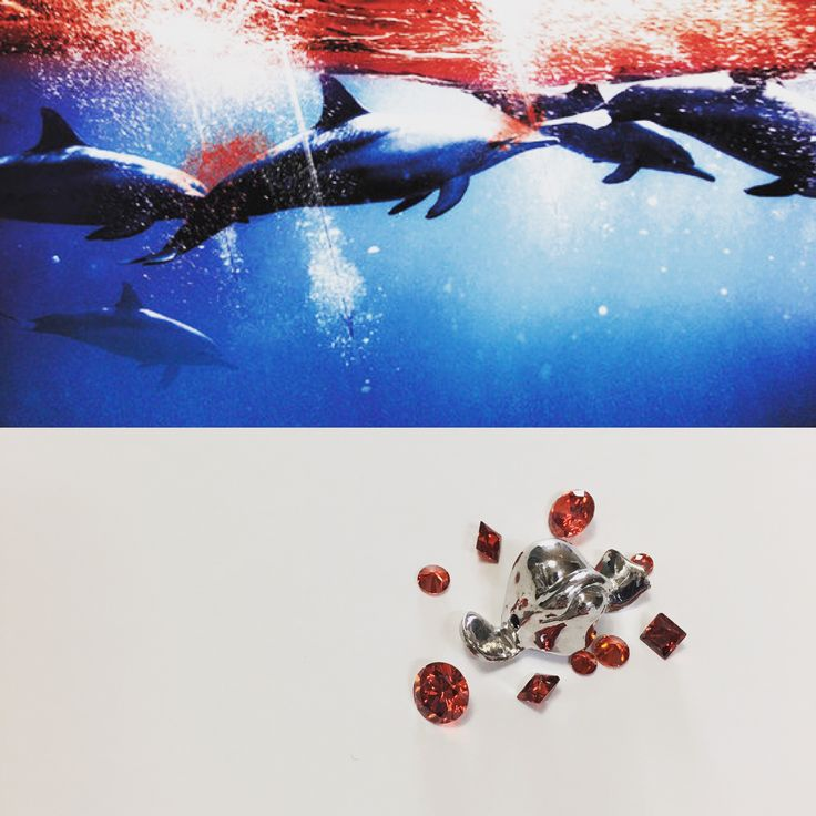 Taiji dolphin hunt. Dolphins in sea of blood. 일본 다이지 돌고래 사냥반대