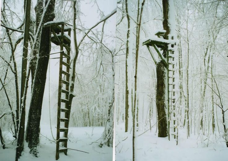 Homemade Ladder Tree Stands
