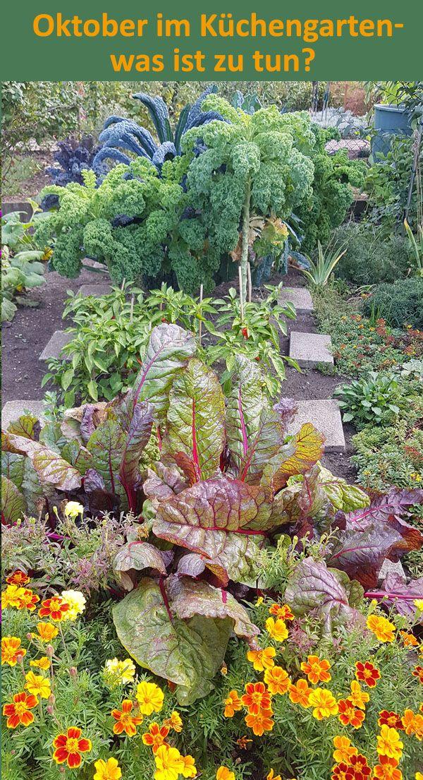 Der Herbst Steht Auf Der Leiter Wir Auch Was Ist Noch Zu Tun Im Obst Und Gemusegarten Garten Garten Deko Gartentipps