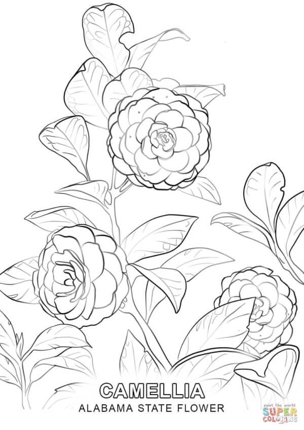 Georgia State Flower Coloring Page Watercolor Coloring Pages