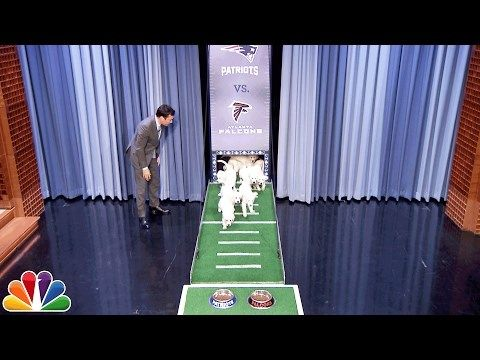 Watch These Precious Puppies Predict Who Will Win #Super_Bowl 51 http://ibeebz.com
