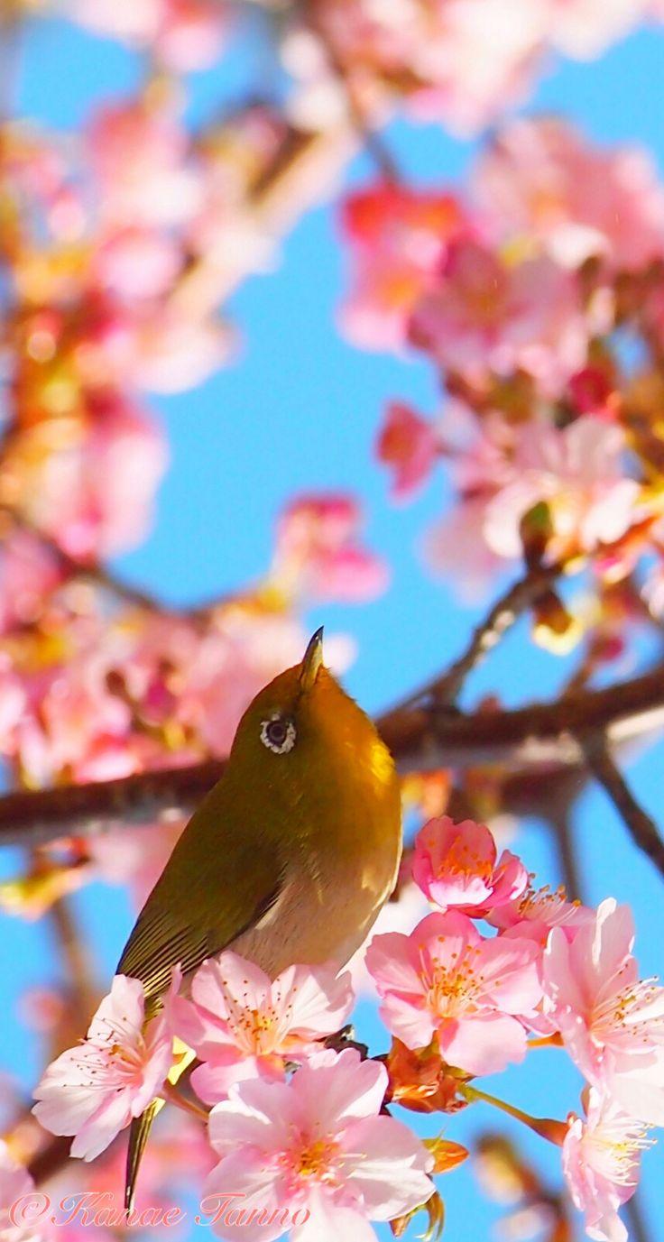 waitting for spring..