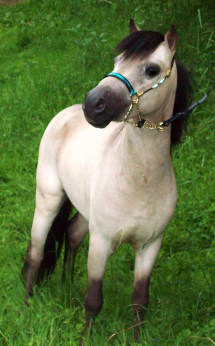 http://miniwondersfarm.webs.com/New%20horses%205-9-09%20012.JPG