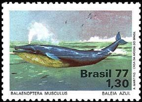 Selos%3A%20Blue%20Whale%20(Balaenoptera%20musculus)%20(Brasil)%20Mi%3ABR%201597%2CSn%3ABR%201510%2CYt%3ABR%201262%2CRHM%3ABR%20C-989%20%23colnect%20%23collection%20%23stamps