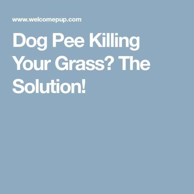 Dog Pee Killing Your Grass? The Solution!