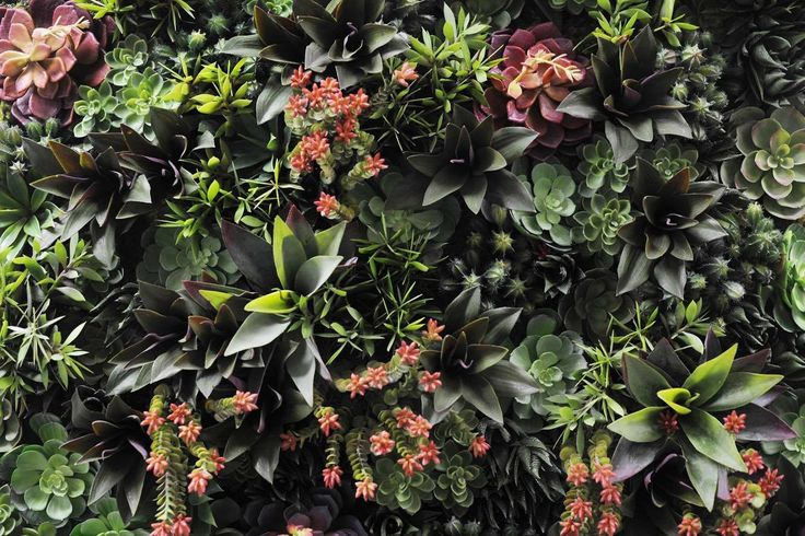 A close up of a recent wall garden completed by Floral by Design | Vertical Wall Garden