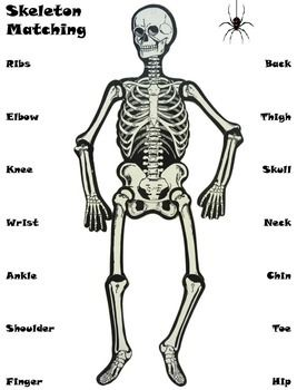 halloween skeleton matching - Halloween Skeleton Template