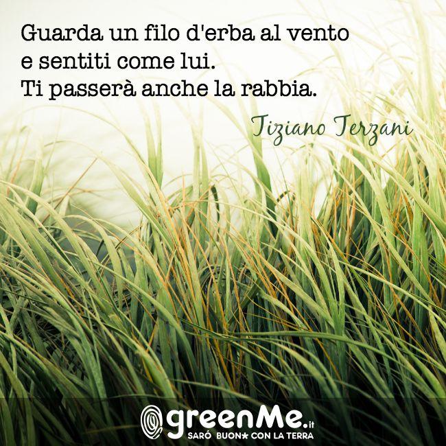 Guarda un filo d'erba al vento e sentiti come lui. Ti passera' anche la rabbia. Tiziano Terziani http://www.greenme.it