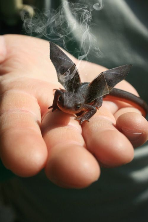 STORY STARTER: When ________ saw the smoke rising from the tiny reptile's head, he placed the creature in a box and headed for the lab.  **Common Core State Standards:  L1, W3, W10, SL4 (uses clauses/transitions/commas, writes routinely within time frames, uses adequate volume) Lesson link: http://pinterest.com/elaseminars/ (Photo source link provided below) Have longer lessons delivered to your inbox monthly by clicking http://elaseminars.com/opt-in-1.htm