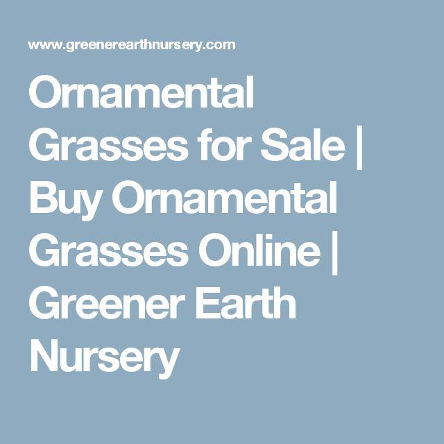 Ornamental Grasses for Sale | Buy Ornamental Grasses Online | Greener Earth Nursery