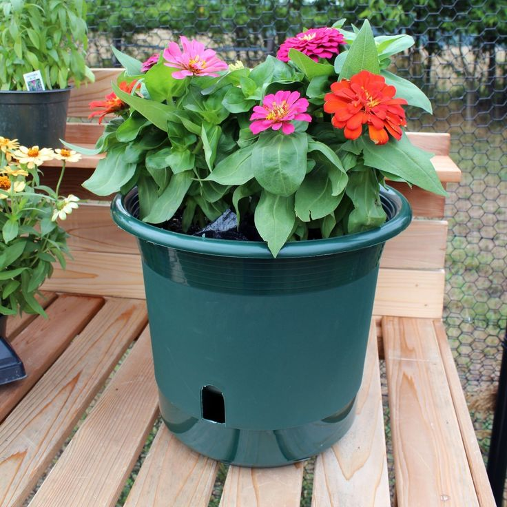 1000 Ideas About Self Watering On Pinterest Gardening