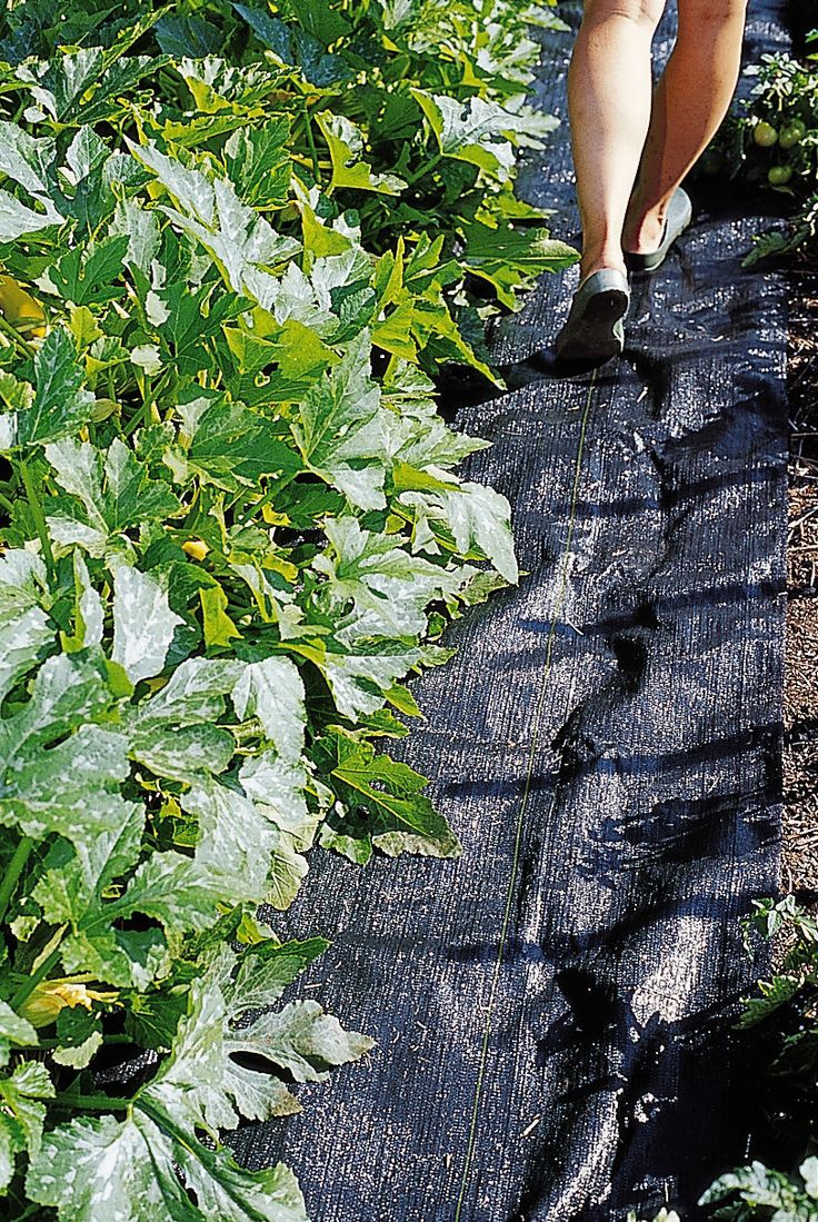 landscaping weed block pro weed mat weed cloth gardener 39 s supply gardening landscaping. Black Bedroom Furniture Sets. Home Design Ideas