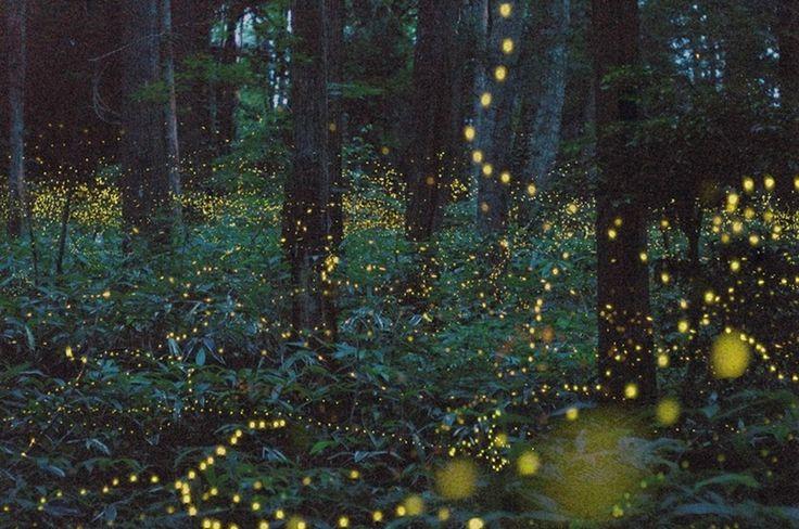 Картинки по запросу светлячки ночью