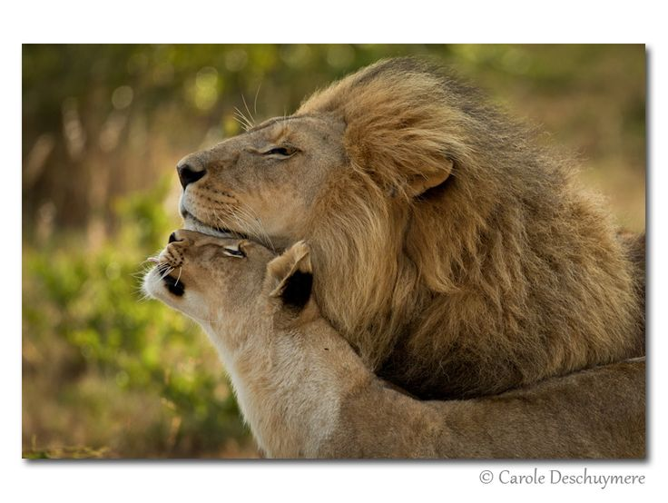 """Meow.  """"Father's love"""" by Deschuymere Carole, via 500px."""