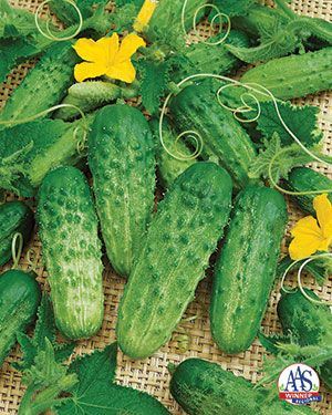 Blue Ribbon Blooms With Images Cucumber Seeds 400 x 300