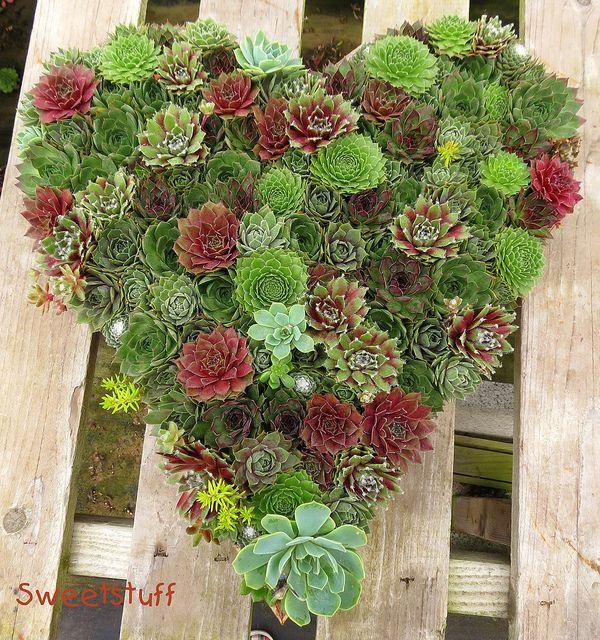 A heart shaped succulent arrangement LOVE!! <3