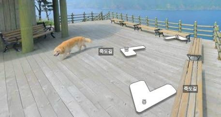 A Friendly Dog Photobombs Google Street Mapper And The Results Are Priceless! | Playbuzz