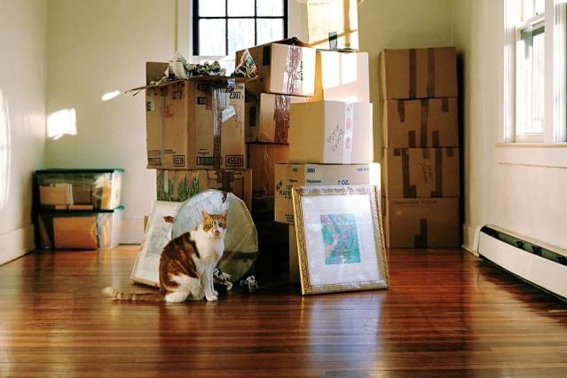 If you're moving and have cats, you know that cats require some time and help in adjusting and settling into their new home. Find out how to make the transition easier for them and you.