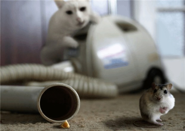 Real Tom & Jerry!