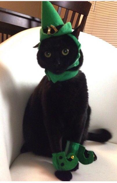 Lucky Black Cat Vintage