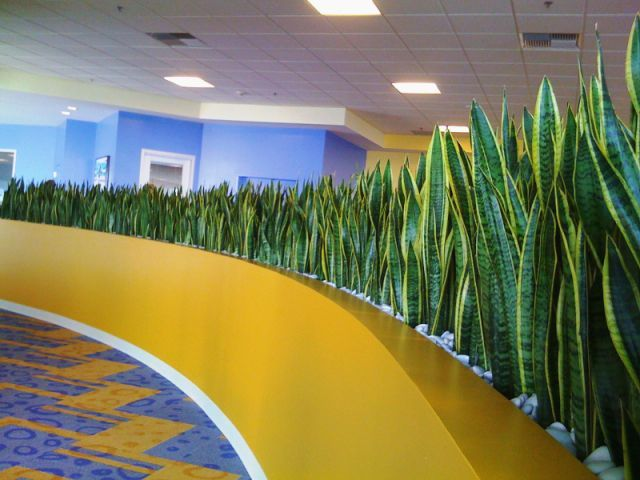 Living, Replica & Preserved Plant Solutions For Home & Office | Plantscapers