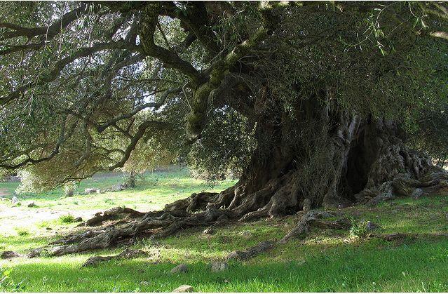 Foliage: alla scoperta di alberi secolari e rarissimi!