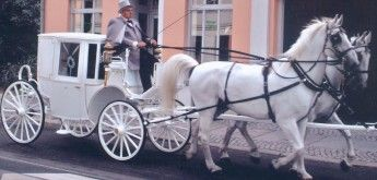 Hochzeitskutsche, gezogen von zwei weissen Schimmeln in Berlin
