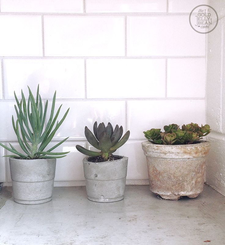#DIY cement planters | Beach House Birthday :: www.thegoldjellybean.com