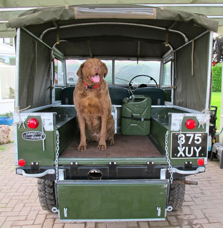 A classic. Re-pin if you like to take road trips with your animal companions. #LandRover #LandRoverPets #Dog