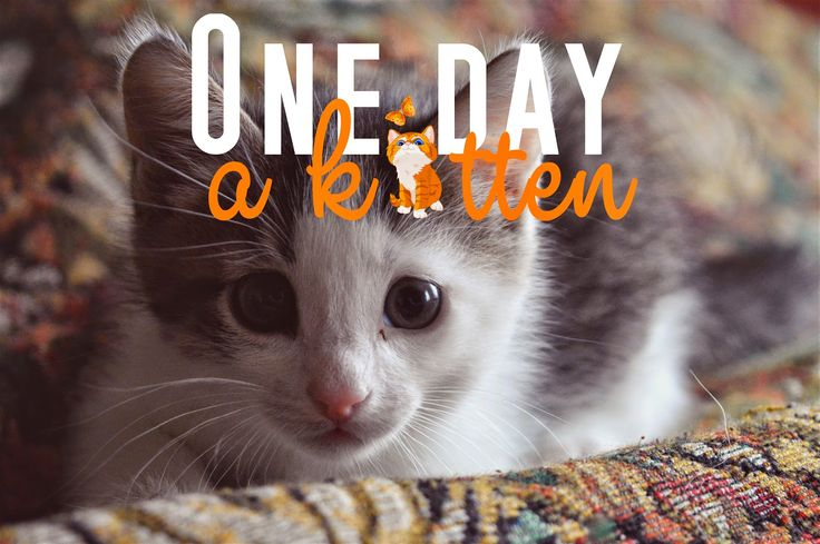 One day a kitten  #day #photo #gallery #kitten #cat #cute #beauty #fashion #home #mur