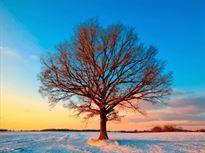 Mooi winters plaatje