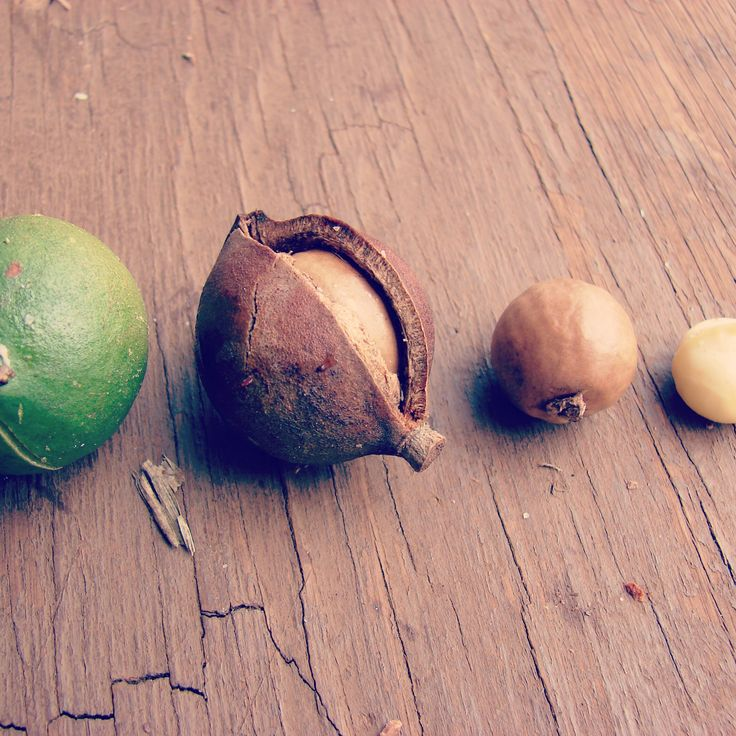Macadamia Oil – produced by cold-pressing macadamia nuts. It is a rich oil with essential fatty acids, which help to delay skin and cell ageing. As we get older, the production of the skin's own oil slows down, therefore supplementary oils like macadamia are important for mature skin. It is high in omega 7, vitamin E and proteins. Macadamia is a hydrating, soothing, healing oil that is ideal for dry, oily and mature skin. Ermana uses macadamia in all their face and body oils.