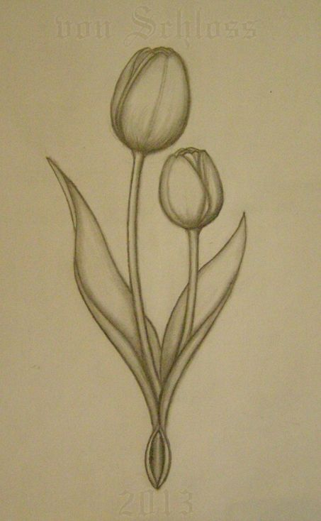 Dutch Tulips sketch for a custom tattoo. by vonSchloss.deviantart.com on @deviantART
