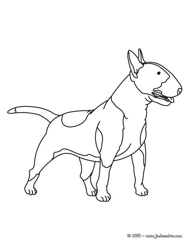 coloriage d'un grand chien bull terrier À imprimer
