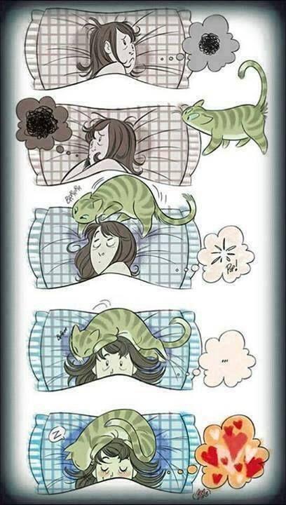 Zu nichts schläft man so gut ein wie zu Katzenschnurren.