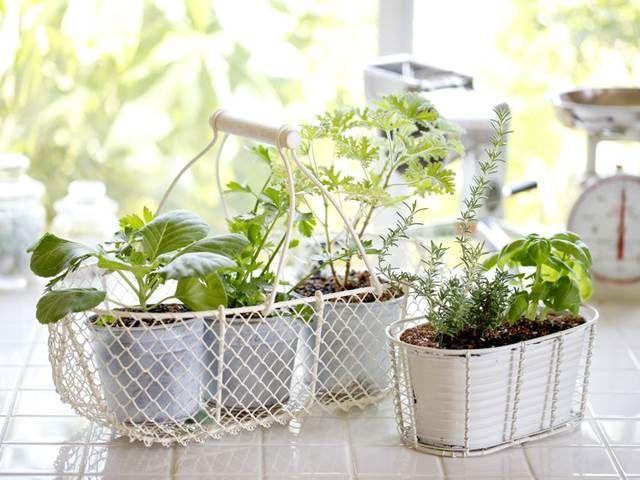 Co by bylo vaření bez koření a bylin? Tyhle dvě radosti k sobě prostě patří. Naštěstí k pěstování voňavých bylinek ...