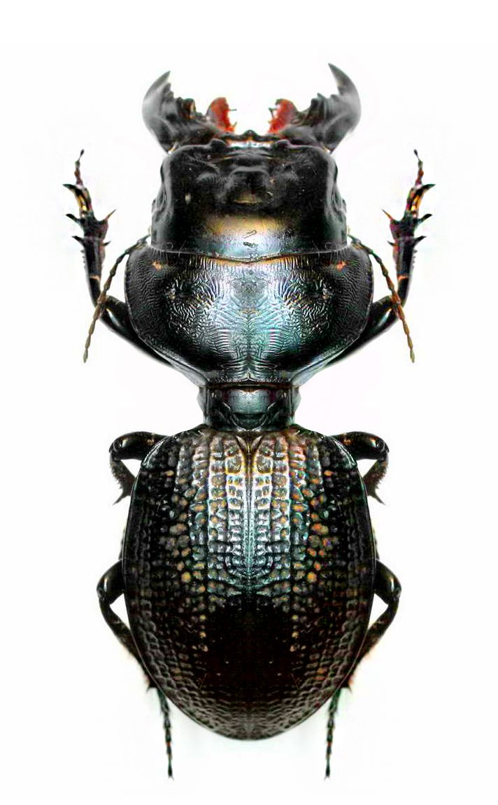 595 Best Images About Makeup On Pinterest: 595 Best Images About Bugs And Butterflies On Pinterest