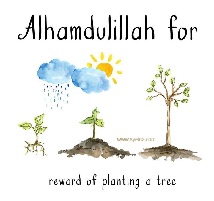 131. Alhamdulillah for reward of planting a tree. #AlhamdulillahForSeries