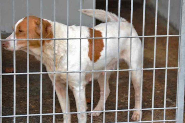 Elvas: Associações de defesa dos animais apoiam actividades diárias do Canil Municipal   Portal Elvasnews