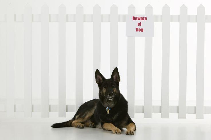 Las mejores 10 razas de perros para protección   eHow en Español