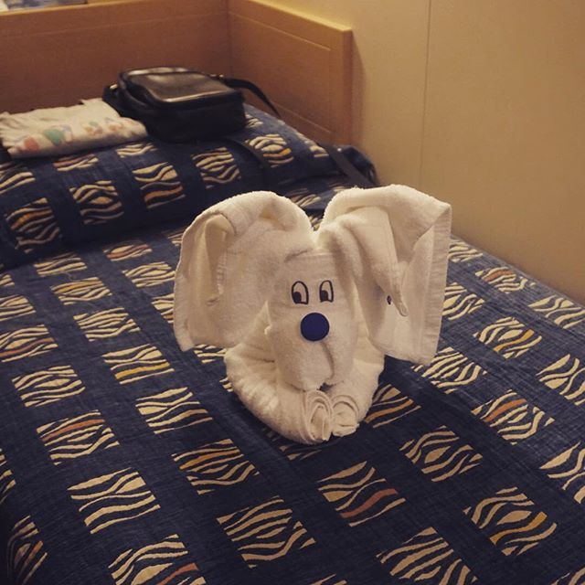 The moment you realize a towel-dog is waiting for you in your cabin: priceless!   Photo by @burakgzd_ #Celestyalcruises #cabin #towel #relax #travel #cruise