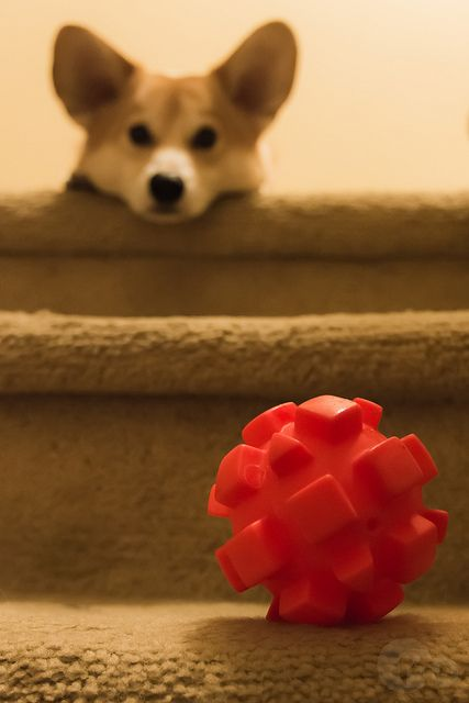 You don't realize how far two steps can be for a little pup!
