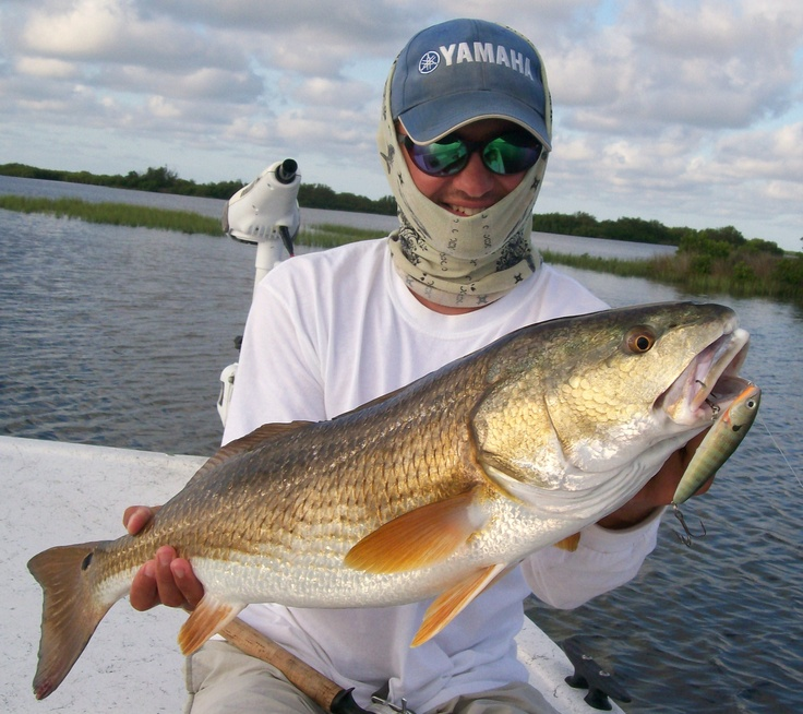 67 best images about florida charter fishing on pinterest for Crystal river fl fishing