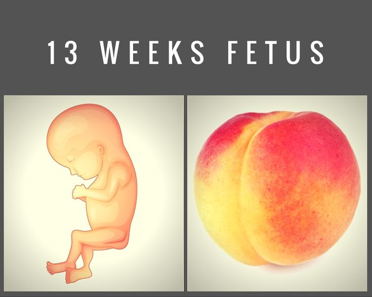 13 weeks fetus: By week 13, their proportions are starting to even out, making them look more like a human.