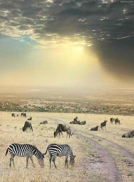Safari in the Krüger National Park....