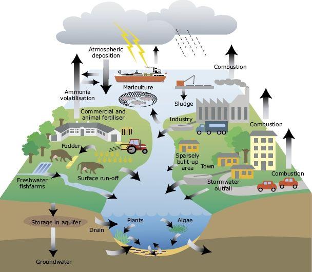 Impacts of urban development on wetlands environmental sciences essay
